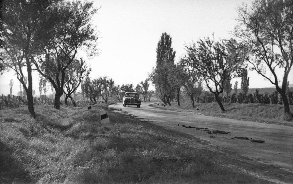 1959 Balatonakali, Magyar nemesítésű Jegenye mandula fasor 71es főút, fotó © Mészáros Zoltán